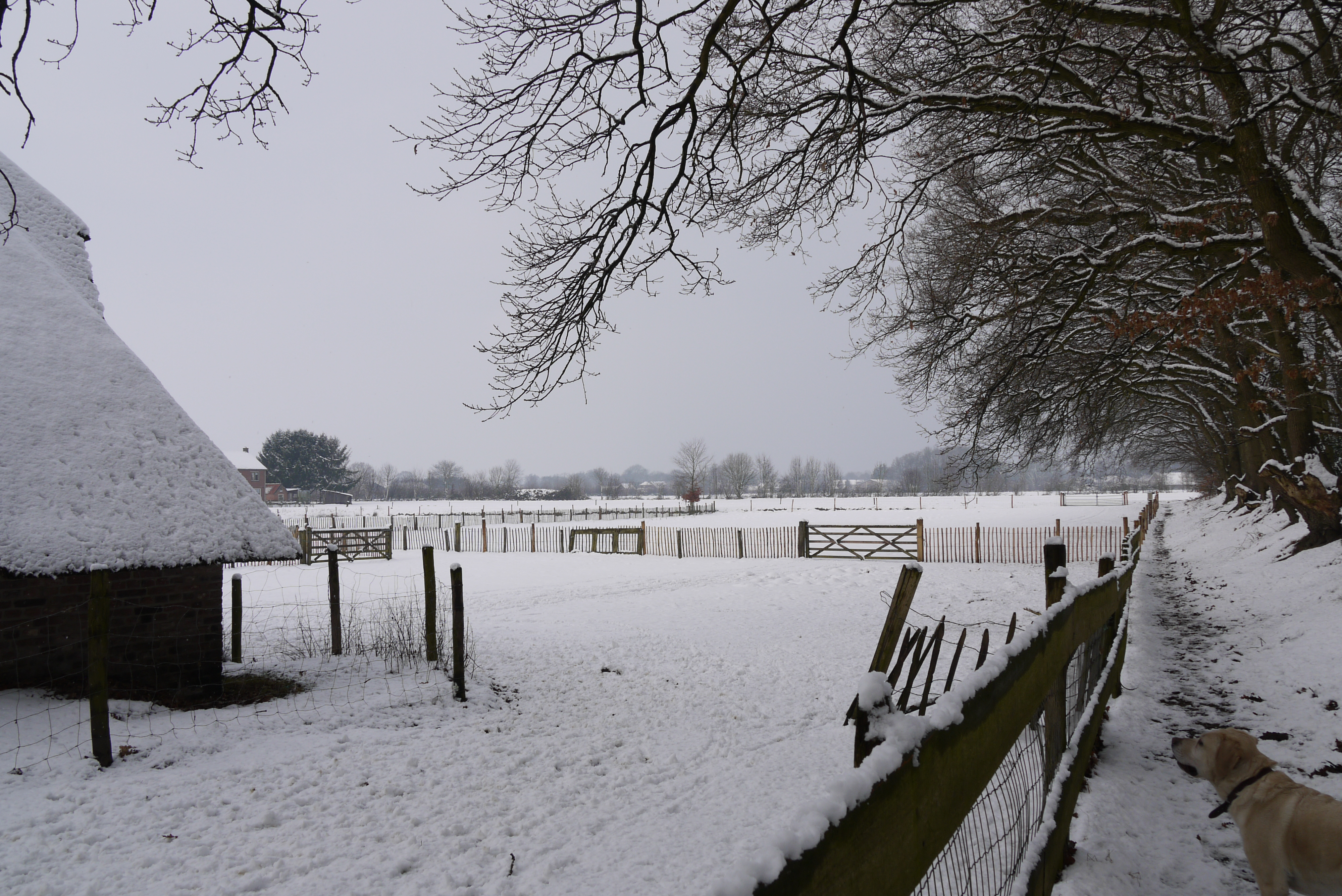 Sneeuw rondom de kooi